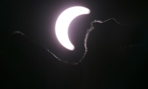 camel eclipse boston globe photography