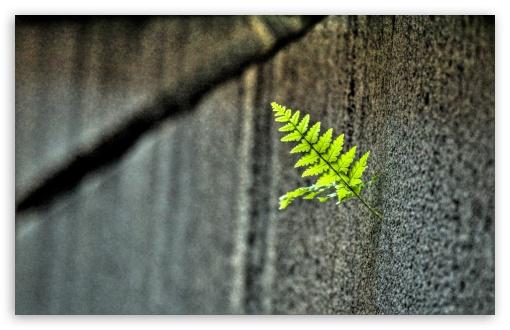 small_fern-t2